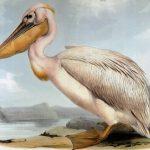 Игра Пеликан и рыбаки